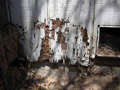 A white wooden wall infected with termites